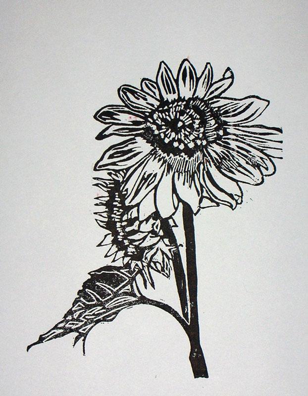 sunflower-1-800